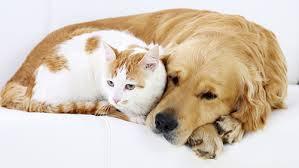 Dichiarati non pignorabili cani, gatti e tutti  gli animali tenutiper affezione o compagnia