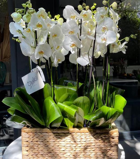 PARLA FLOWER BEYAZ ORKİDE ARANJMANI.png