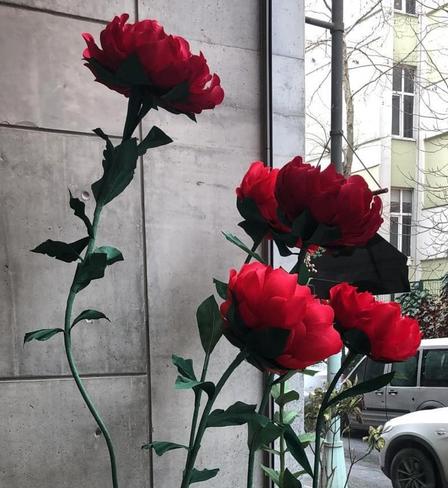 Les Benjamins Parla Flower Art