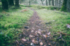 Low shot of path by Paul Jarvis on Unsplash