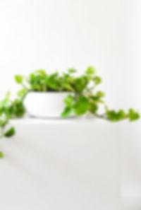 GreenAssembly_3.jpg