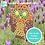 Thumbnail: Owl: Outdoor Mosaic Base Substrate - Clear Acrylic Perspex