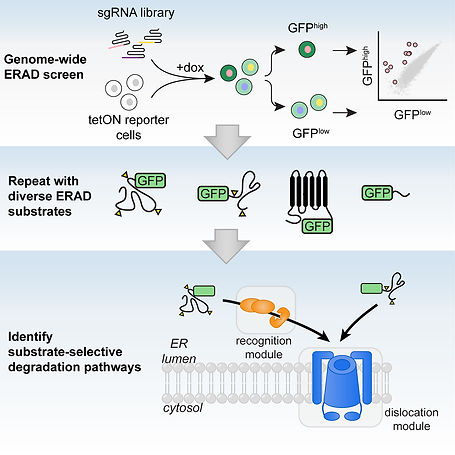 CRISPR G-abstract.jpg