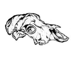 EVRS - Skull