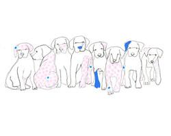 EVRS - Pups