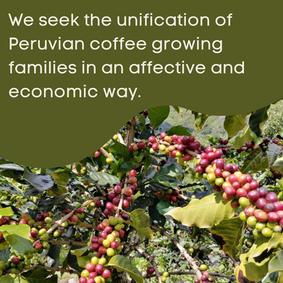 buscamos la unificación de la familias cafetaleras peruanas de manera afectiva y económica
