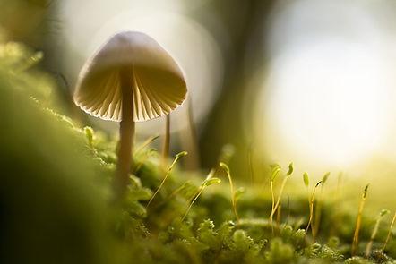 nature-768563_1280.jpg