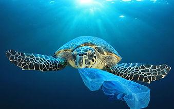 tortue plastique.jpg