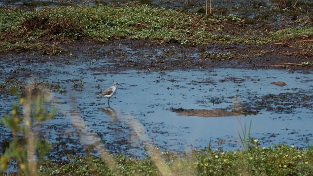 Sandpiper Marsh