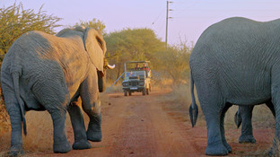 Elephant safari vehicle