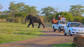 Elephants on a game drive|Self drive route dinokeng|elephant encounters|