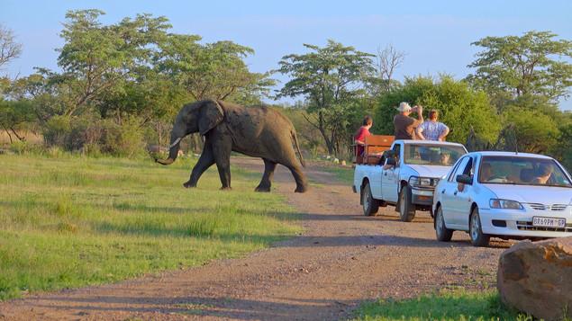 Elephants on a game drive|Self drive route dinokeng|elephant encounters|