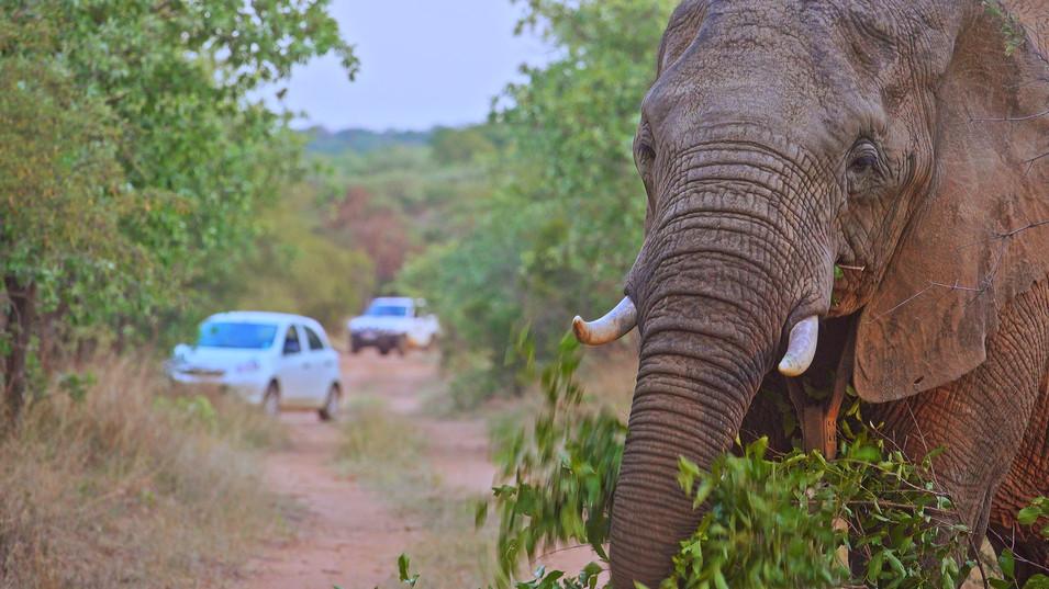 Seld drive|dinokeng|mighty elephantsUntitled_1.5.1.jpg