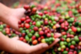republica_dominicana_y_honduras_firman_acuerdo_para_impulsar_la_produccion_cafe.jpg