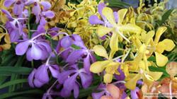 aibonito-flower-festival-2.jpg
