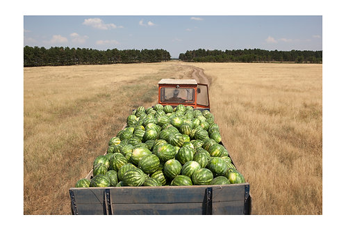 """""""Watermelons"""""""
