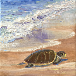 Honu- Looking for a Place to Sleep