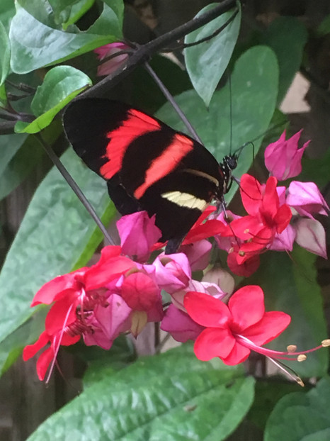 Mackinac Island has a cool butterfly house