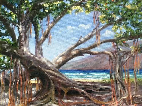 Lahaina Banyan Tree- Maui