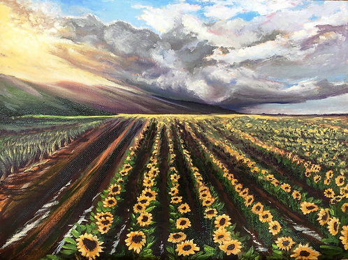 Coming and Going from Cane to Sunflowers- Maui