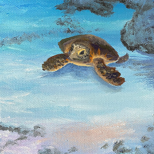 Coming Up for Air-Honu on Maui