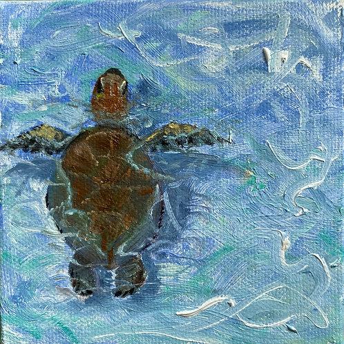 Floating Honu