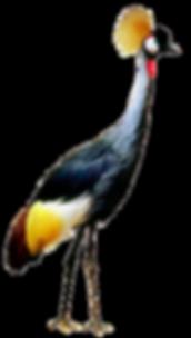Copy%2520of%2520bird-4738559_1920_edited