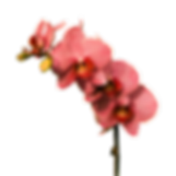 flower-2023089_1920.png