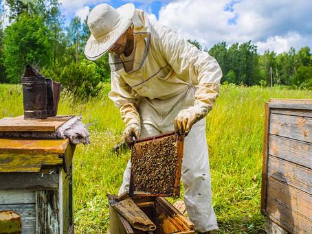 Working 2050: Beekeeper