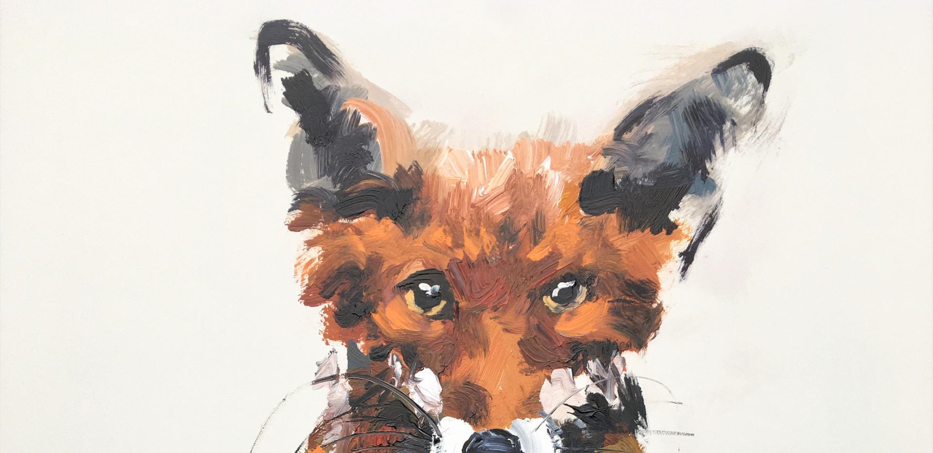 Fred fox