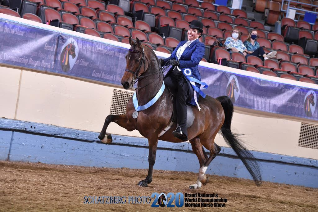 Worlds Championship Morgan Horse Show