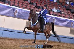 Worlds Championship Morgan Horse Show