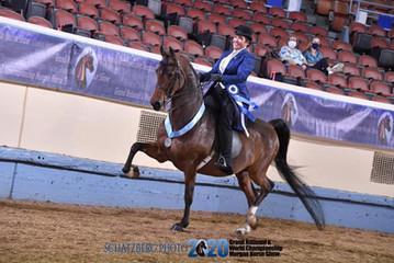 custom saddle seat day coat