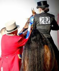saddle seat champion