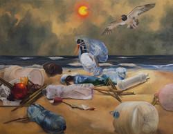 Migrations: Oystercatcher