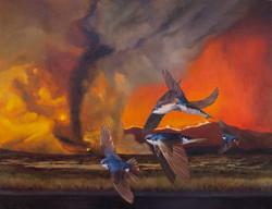Migrations: Tree Swallow