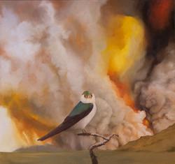 Migrations: Violetgreen Swallow