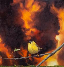 Migrations: Wilson's Warbler small