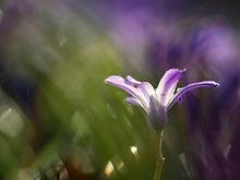 hope purple flower.jpg