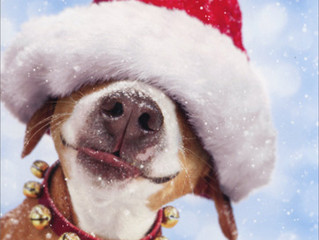 Happy Christmas from Fetch Recruitment!