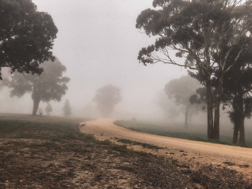 The Wildness in the Fog: How Cold Winter Mornings Warm My Soul