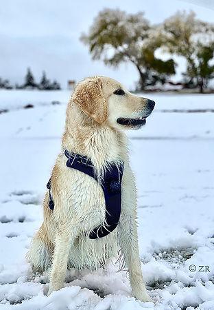Zoey in the Snow.jpg