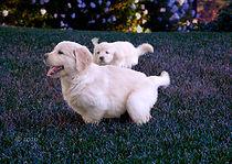 puppies running.jpg