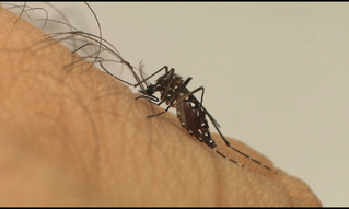 Nova sequência genética do vírus Zika encontrada no país pode causar nova epidemia