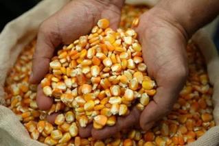 Governo começa distribuição de sementes a agricultores familiares do RN