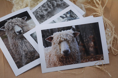Sheep Note Cards
