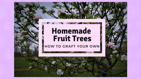 Homemade Fruit Trees, How to Graft Your Own!