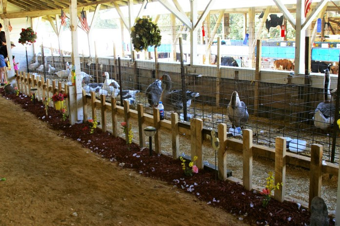 Geese at poultry show