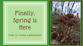 Finally, Spring is Here! Time to Think Garden