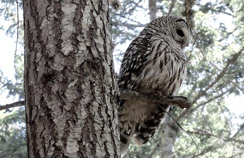 Owl-4%252520publications_edited_edited_e
